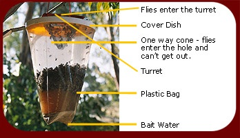 red top fly trap instructions